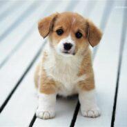 Как из щенка воспитать умную собаку?