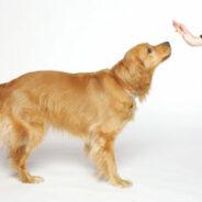 10 типичных ошибок дрессировки собак