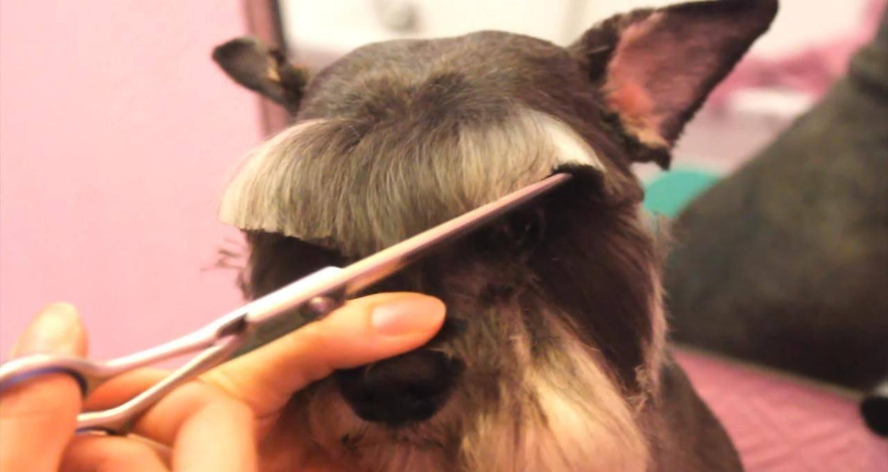 видео как машинкой подстричь кошку