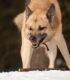 Агрессивность к другим собакам
