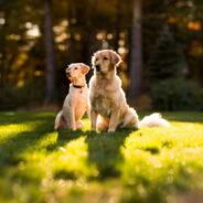 Спасаем собаку от перегрева на солнце!
