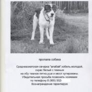 Пропала собака. Что делать?