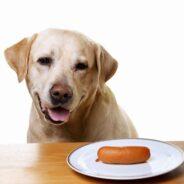 Как отучить собаку от воровства со стола?
