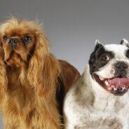 Вторая собака в доме — сложности и преимущества