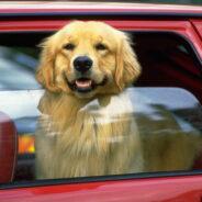 Готовимся вместе с собакой в дальнюю автомобильную поездку.