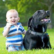 Новорожденный ребенок и собака. Начало большой дружбы.