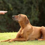 Социализация глухой собаки