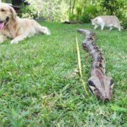 Первая помощь собаке при укусе насекомых или змеи