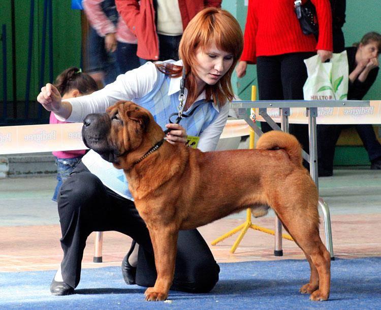 Собака в ринге
