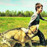 Вольер или квартира — где собака чувствует себя счастливой?