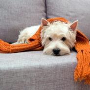 Заболевания сердечнососудистой системы у собак