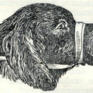 Приемы фиксации собаки