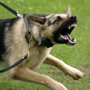 Поведение собаки в конфликтной ситуации. Стоит ли надеяться на защиту?