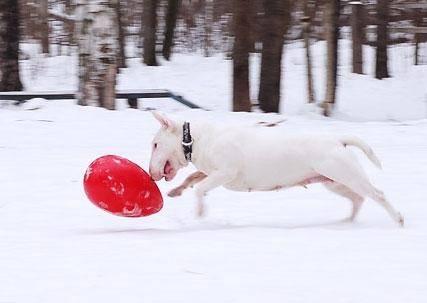 игрушка для собак яйцо