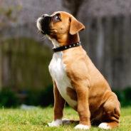 Неожиданные опасности для собак