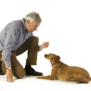 Как НЕ нужно общаться с собакой
