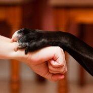 Как заслужить доверие собаки