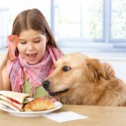 Вредные привычки собак