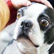 10 самых стойких заблуждений насчет собак