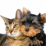 Кот и собака — мирись-мирись и больше не дерись!
