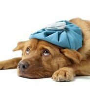 Стоматит и болезни желудка у собак
