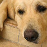 Последние дни собаки. Как пережить ее смерть?