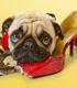 Бобик в гостях у Барбоса или как приучить собаку переносить одиночество