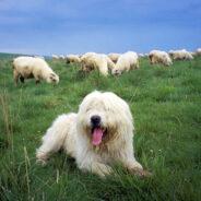 Содержание собак в Англии. Интересные и необычные факты.
