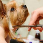 Хитрости стрижки собак в домашних условиях