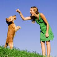 Добрый хозяин – хорошая собака
