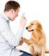 Как стать владельцем воспитанной собаки