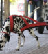 Вейтпуллинг — тяжелая атлетика для собак