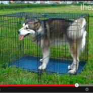 Клетка для собак и как ей пользоваться. Видео!