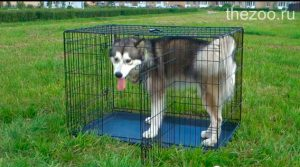 клетка для собак, клетка для больших собак, клетка для перевозки собак, клетка переноска для собак, клетка для крупных собак, большая клетка для собаки, размеры клеток для собак, складная клетка для собак, металлические клетки для собак, клетка для маленьких собак, выставочная клетка для собак, клетка для собак купить