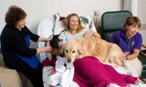 канистерапия, что такое канистерапия, собаки для канистерапии, история канистерапии, показания к канистерапии, болезни которые лечат канистерапией, противопоказания для канистерапии, характер собаки для канистерапии