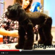 Какая порода собаки на видео? Ждем ваших комментариев!