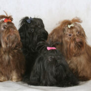 Российские породы собак