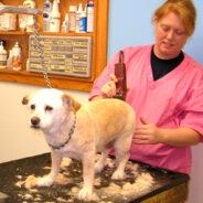 Можно ли оставлять собаку саму в грумерском салоне?