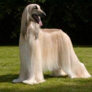 Как стимулировать рост шерсти собаки?