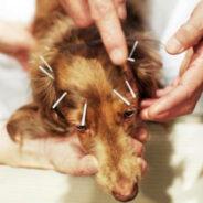 Нетрадиционная ветеринария
