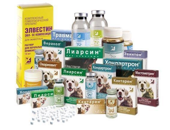 Гомеопатия в лечении суставов животных слабость боль мышцах суставах