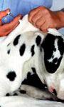 Чипирование животных — правда и вымысел