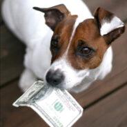 Налог на домашних животных. Платить или не платить?