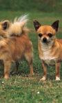 Разные типы шерсти собаки — особенности ухода. Часть 1.