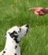 Черный список методов обращения с собакой