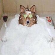 Как правильно выбрать косметику для собаки (советы для начинающих)