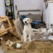 Собака и интерьер. Как сделать квартиру безопасной для наших собак