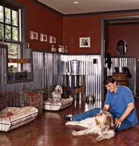 dog-in-room