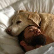 Собака и интерьер. Комфорт