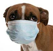 Болезни собак, передающиеся человеку